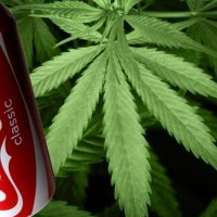 Coca-Cola'nın da gözü esrar pazarında