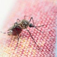Drone ve akıllı telefonlar sıtmaya karşı kullanılacak