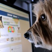 Dünyada her dört kişiden biri Facebook kullanıyor!