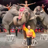 Fil gösterisi kalktı, sirk iflas etti