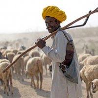 Hindistan'da hayvanlara da insanlarla aynı haklar tanındı