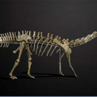 İki dinozor iskeleti 1,4 milyon Dolar'dan satışta