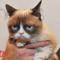 İnternetin göz bebeği Grumpy Cat öldü