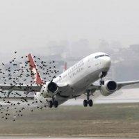 Kuşları havaalanından uzak tutan dron