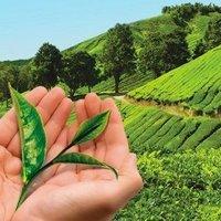 Lipton'dan Çayımız için Hep Birlikte' programı