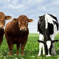 Medyaya virgül koydu, hayvancılık sektörüne transfer oldu!
