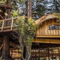 Microsoft çalışanları için ağaç evler yaptırdı