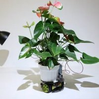 Sibernetik bitki: Elowan