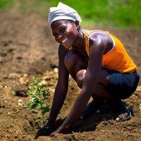 Timberland 5 yılda 50 milyon ağaç dikme taahhüdünü açıkladı