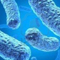 Zararlı olarak bilinen bakteriler sayesinde sağlıklıyız