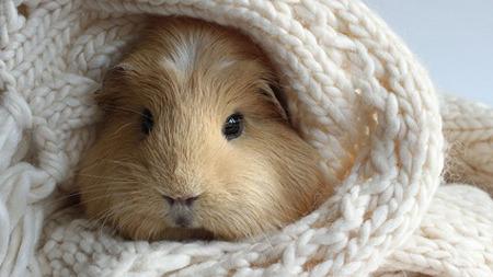 İnternetin en tatlı hayvanı BooBoo ile tanışın!