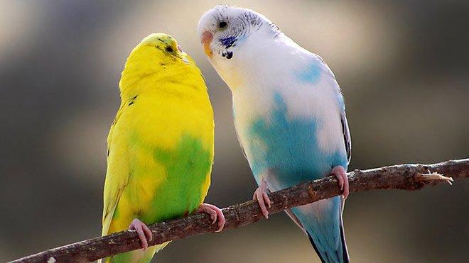 Kuşların birbiriyle iletişimiyle ilgili çok ilginç bir detay keşfedildi