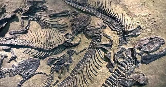 Muhteşem keşif! En az 200 milyon yıllık…